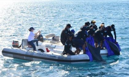 Liberaron 2 delfines recuperados en el CAV de Corpamag