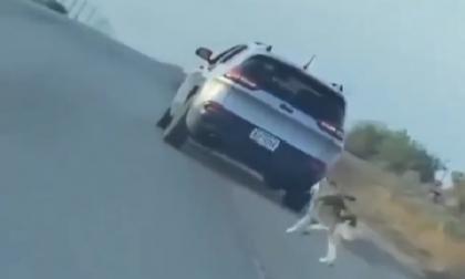Viral: conmovedor video de perro Huski detrás de dueño que lo abandona en una carretera