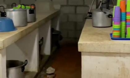 Encuentran ratas en comedor y cafetería de colegio en Santa Marta