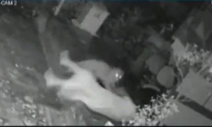 Gracias a su bastón mujer pudo sobrevivir a ataque de leopardo