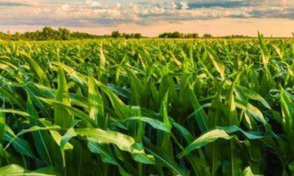 Desarrollo agropecuario  columna de Hernán Baquero Bracho