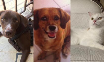 Mascotas Wasapea | Ayuda a encontrar a Niko, Menta y a Daddy