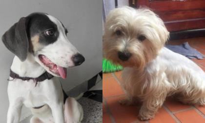 Mascotas Wasapea | Ayuda a encontrar a Oliver y a Ángel