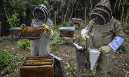 Así trabajan la miel 159 familias de Chengue en los Montes de María