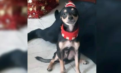 Mascotas Wasapea | 'Choky' se perdió en el barrio Universal