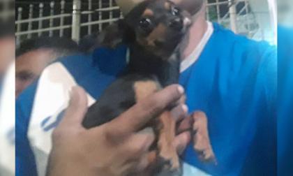 Mascotas Wasapea   Familia busca a 'Toby' en Villa Las Moras segunda etapa