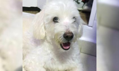 Mascotas Wasapea | 'Mateo' es buscado por su familia en el barrio El Carmen