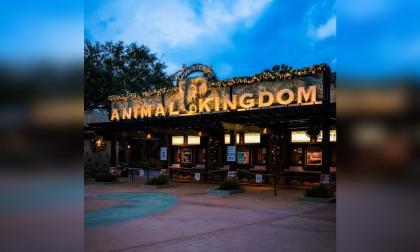 La magia de Disney World