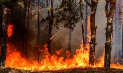 La Tierra en llamas| columna de Catalina Rojano O.