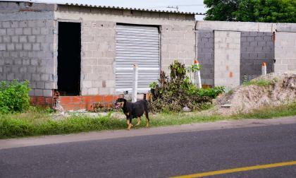 Objeto social: expropiar   columna de Ricardo Plata Cepeda