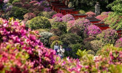 Japoneses disfrutan de temporada floral pese a la pandemia