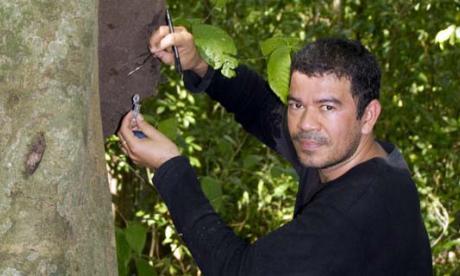 El biólogo Robin Casalla mientras extrae termitas de un nido en el Parque Tayrona.