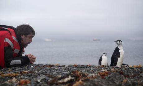 Estudio advierte que pingüinos rey podrían desaparecer a finales de siglo