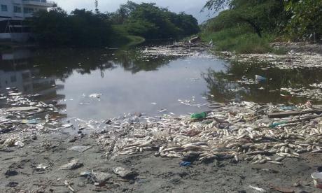 Mortandad de peces en la desembocadura del río Manzanares, en Santa Marta