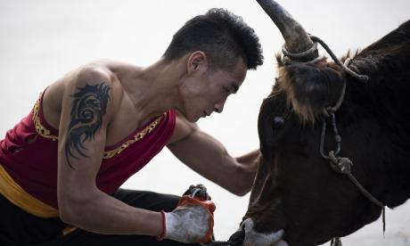Wushu, el arte marcial chino en el que luchan contra toros