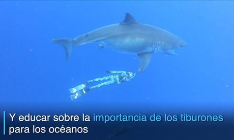 En video   Dos buzos nadaron al lado de un gigantesco tiburón blanco en Hawái