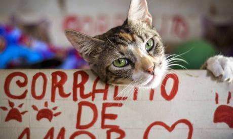 El proceso para adoptar una mascota en Barranquilla