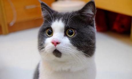 Top 10 de los gatos más famosos de la red