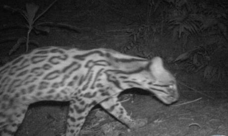 Corpoguajira se reúne con la comunidad donde fue visto un jaguar