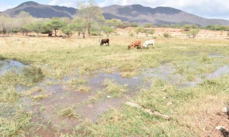 Extracción sin control está acabando poco a poco con el río Badillo