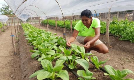 Finagro ofrece $1,2 billones para irrigar recursos a productores agropecuarios
