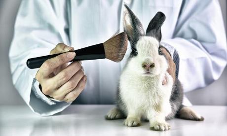 Solo falta la firma de Duque para prohibir pruebas cosméticas en animales