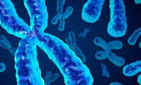 Científicos establecen primera secuencia completa de un cromosoma humano