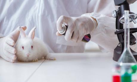Colombia prohíbe pruebas cosméticas en animales