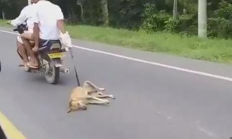 En video | Caen los dos hombres en moto que arrastraron un perro en Bolívar