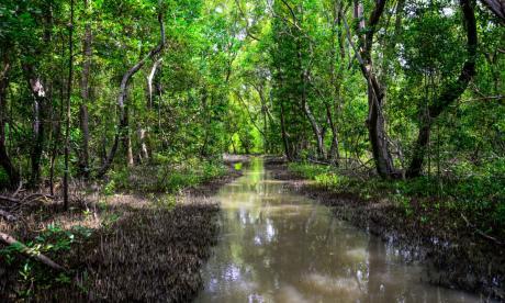 Minambiente explica operación de las FF.MM. en Isla Salamanca