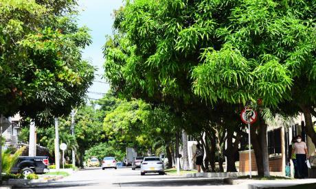 Barranquilla cuenta con un 26% de cobertura arbórea