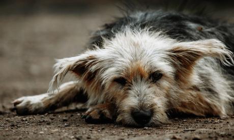 Caótica pandemia de las mascotas en Montería entre el maltrato y el abandono