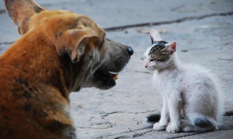 ¿Cédula animal para perros y gatos? Proyecto de Ley lo haría realidad