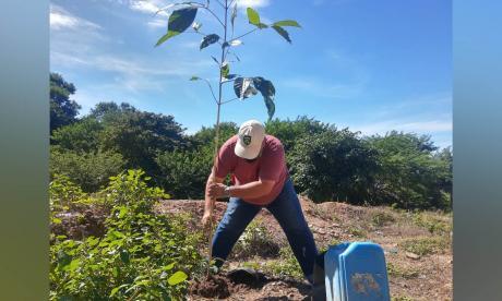 En 40 días en Santa Marta se han sembrado 6.600 árboles nativos