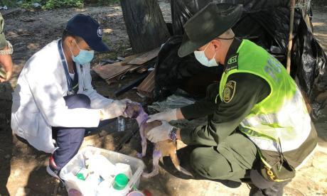 Policía y Alcaldía atienden a perro abandonado y en mal estado
