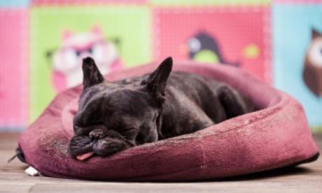Consejos para crear entornos acordes a las necesidades de las mascotas