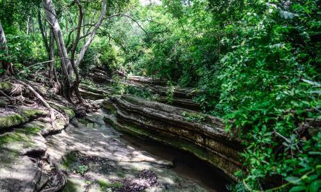 Más de 20 mil hectáreas de áreas naturales deben priorizarse en el Atlántico
