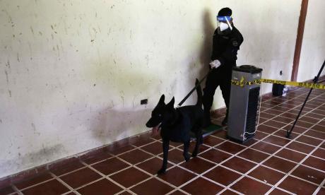 Guatemala prueba a perros policías entrenados para detección de covid-19