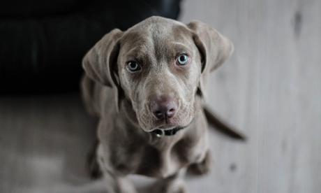 Estados Unidos prohíbe ingreso de mascotas desde Colombia