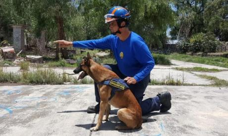 Los perros también ayudan a mantener la esperanza en el lugar del derrumbe en Miami