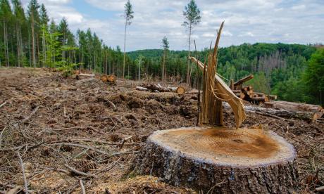 Día de la Sobrecapacidad de la Tierra: este jueves, la humanidad habrá consumido los recursos disponibles del año