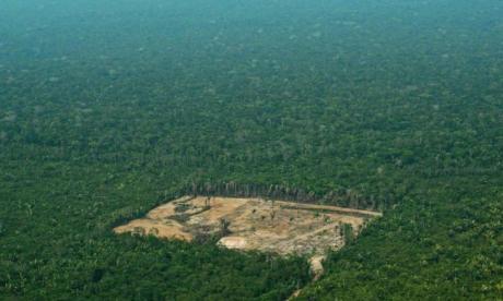 Amazonia en peligro