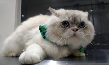Mascotas Wasapea   Piden ayuda para encontrar a 'Kitty'