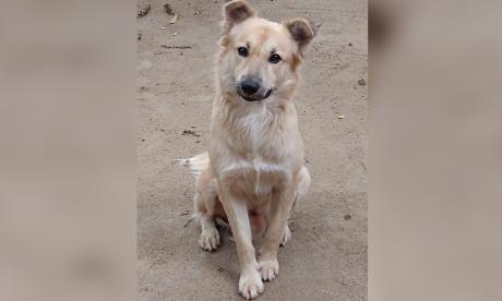 Mascotas Wasapea   Ayudemos a 'Dio' a regresar con sus dueños