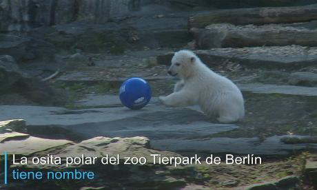 La osita polar de Berlín ya tiene nombre