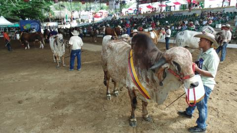 Habrá juzgamientos Brahman, Gyr, Guzerá, Doble Propósito, exhibición bufalina y ovinocaprina, y Feria Equina grado A.