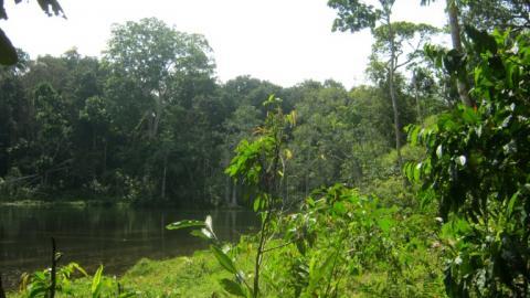 Los bosques son la única infraestructura segura y natural para almacenar carbono, según los expertos.