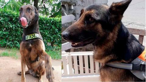 'Homero' y 'Maximus', los caninos que buscan a Albertico.