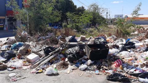 Entre las basuras se encuentran desechos alimenticios y animales muertos.