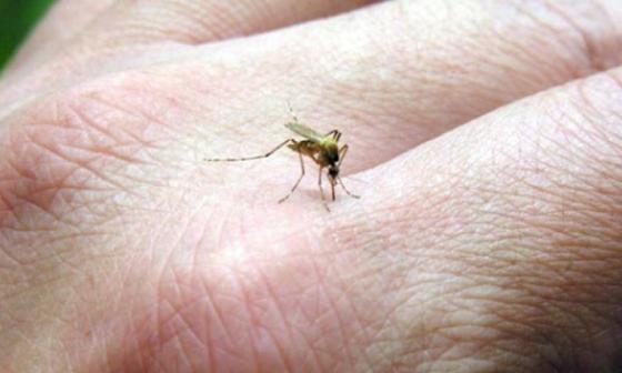 Temen que lluvia dispare casos de zika y chikunguña